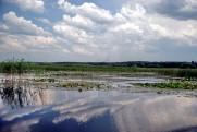 Река Оскол - Краснооскольское вдхр. в июне 2010