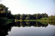 Река Северский Донец в августе 2010 Левковка - Изюм